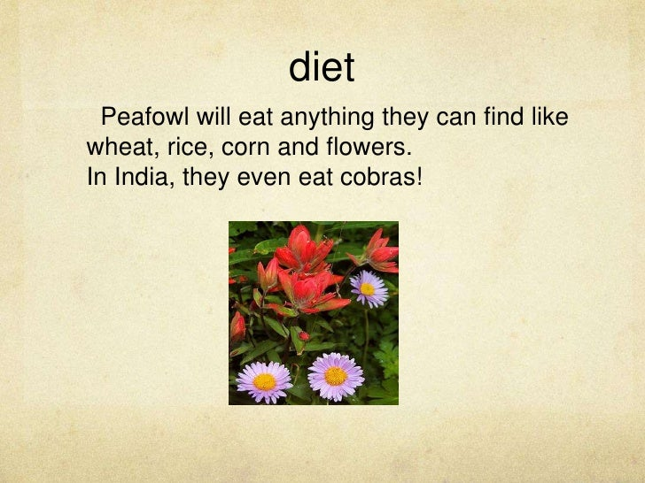 The Three Types Of Peafowl