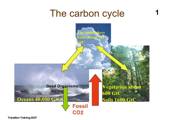 The carbon cycle Transition Training 2007 1 Oceans 40,000 GtC Vegetation about 600 GtC Soils 1600 GtC The atmosphere holds...