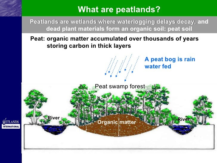 Key to Climate Change with Peatlands