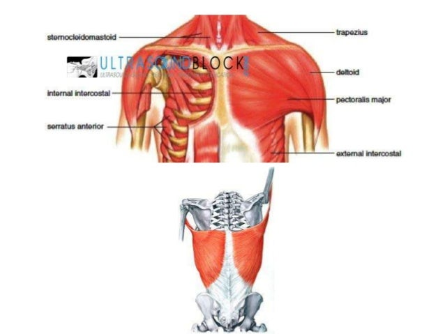 Pec I and PECS II, serratus anterior block
