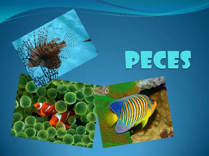 Peces<br />