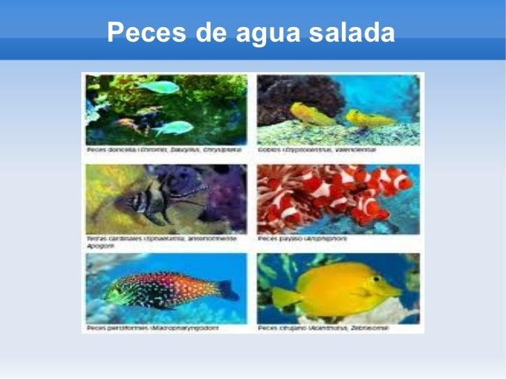 Peces for Construccion de tanques para peces