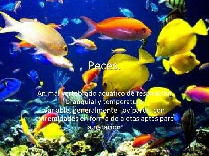 Peces. Animal vertebrado acuático de respiración          branquial y temperatura   variable, generalmente ovíparos, conex...
