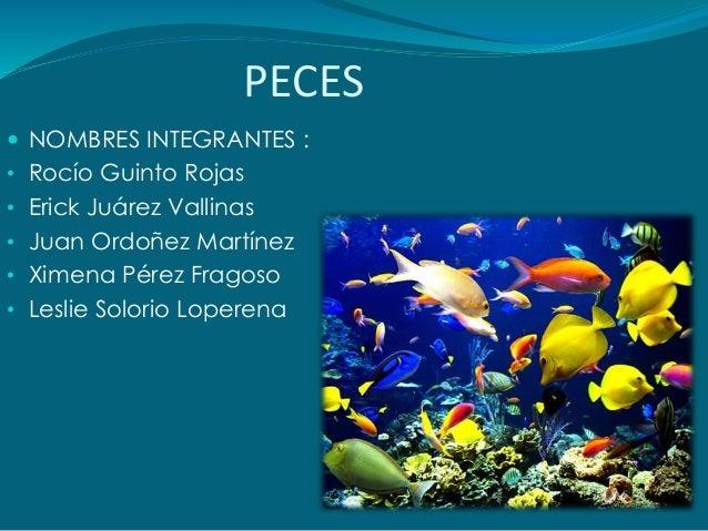 PECES  NOMBRES INTEGRANTES : • Rocío Guinto Rojas • Erick Juárez Vallinas • Juan Ordoñez Martínez • Ximena Pérez Fragoso ...