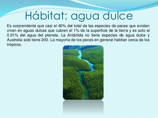 Hábitat: agua dulce Es sorprendente que casi el 40% del total de las especies de peces que existen viven en aguas dulces q...
