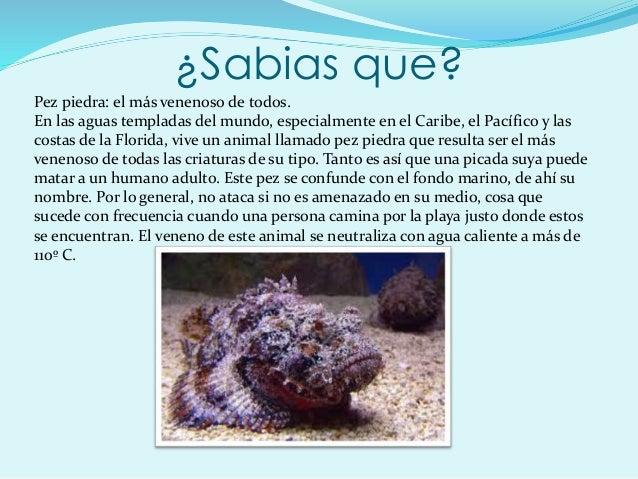 ¿Sabias que? Pez piedra: el más venenoso de todos. En las aguas templadas del mundo, especialmente en el Caribe, el Pacífi...