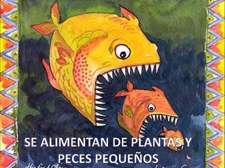 peces c