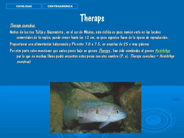 Peces de ornamentales de agua dulce trabajo actual for Reproduccion de peces ornamentales