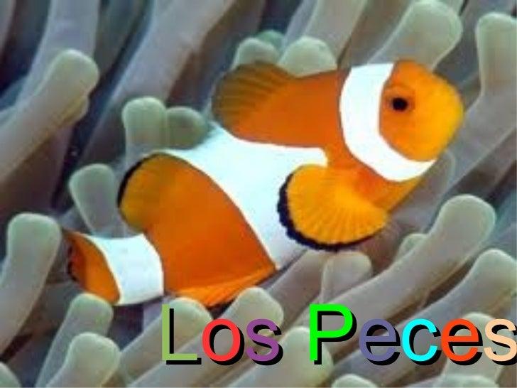 PECES (Carmen, HollY, María, Belén, Paula)