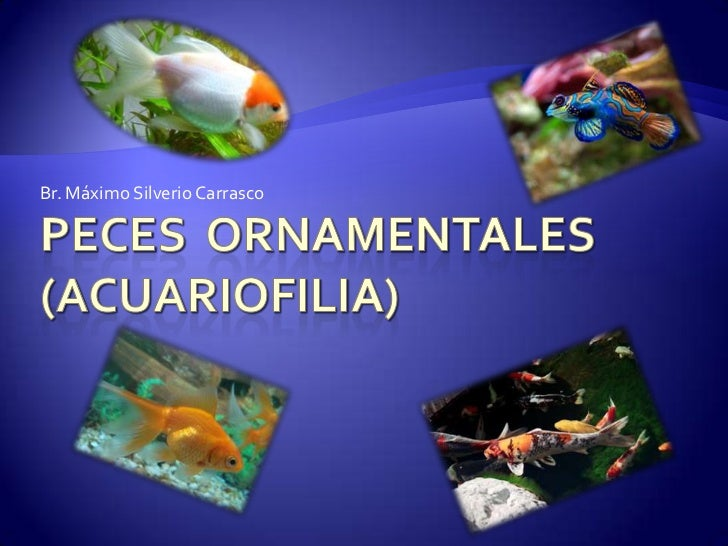 Peces ornamentales for Manual de peces ornamentales