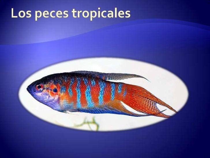 Peces ornamentales for Estanques de peces ornamentales