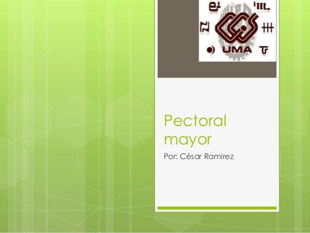 Pectoral mayor Por: César Ramirez