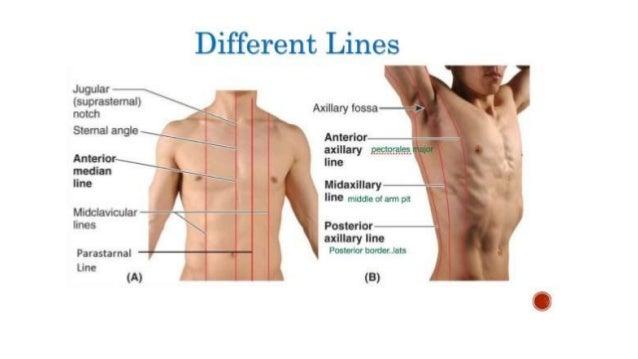 midaxillary line
