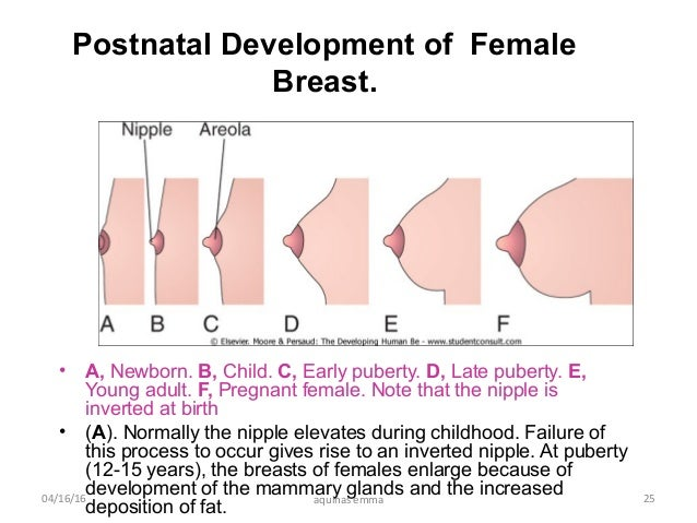 Pectoral region and breast surgical anatomy