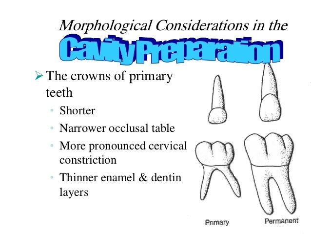 Morphological Considerations in the Primary Dentition The crowns of primary teeth • Shorter • Narrower occlusal table • M...
