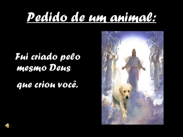 Pedido de um animal: <ul><li>Fui criado pelo mesmo Deus que criou você.   </li></ul>