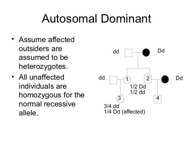 relationship between sex chromosomes and autosomes