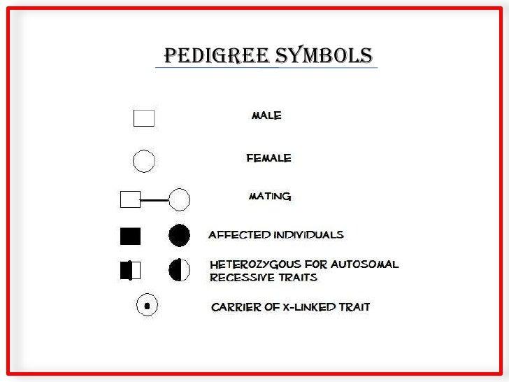 Pedigree Basics border=