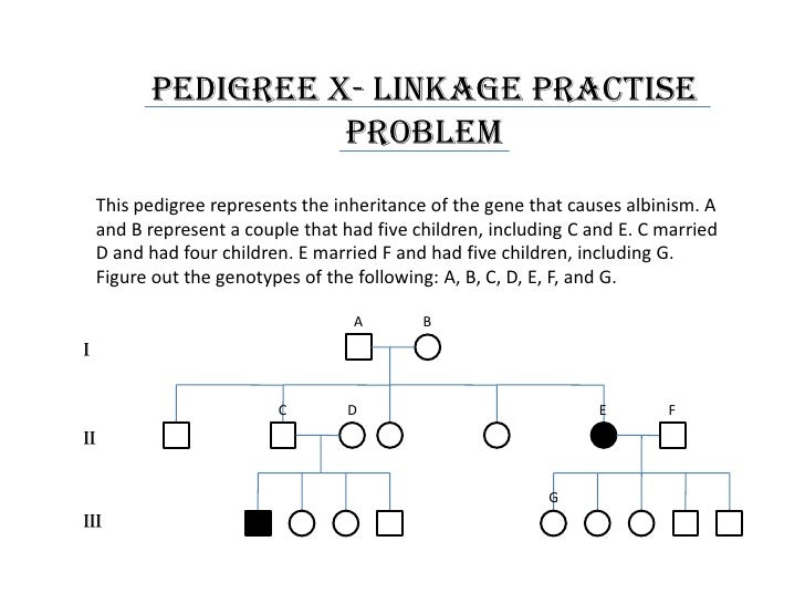 Worksheets Pedigree Practice Worksheets pedigree practice problems worksheet sharebrowse basics