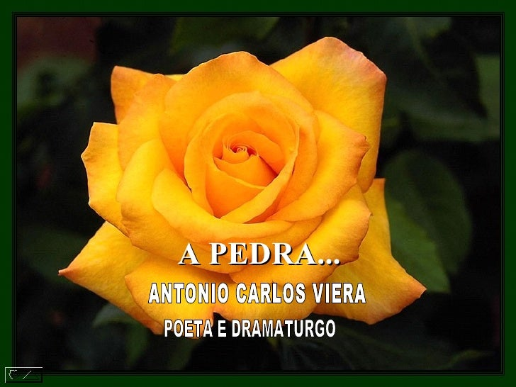 A PEDRA...   ANTONIO CARLOS VIERA  POETA E DRAMATURGO