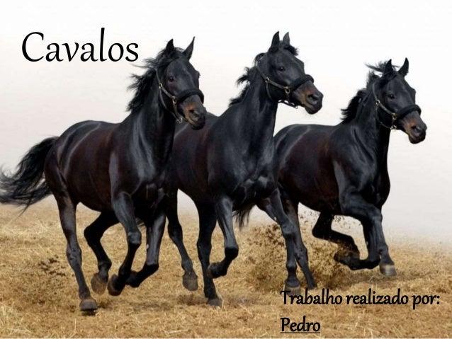 Cavalos Trabalho realizado por: Pedro