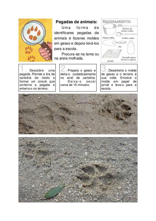 Pegadas de animais: Uma forma de identificares pegadas de animais é fazeres moldes em gesso e depois levá-los para a escol...