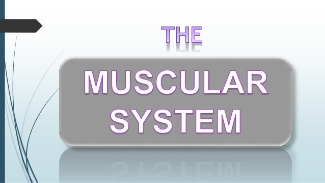 Muscle is the tough, elastic tissue that makes body parts move. All animals except the simplest kinds have some type of mu...