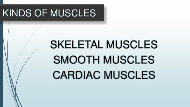 Are found in most in the body's internal organs. Unlike skeletal muscles, smooth muscles do not have striations. Smooth mu...
