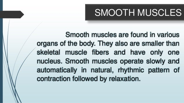 Cardiac muscle has striations like skeletal muscle, but like smooth muscle, it contracts automatically and rhythmically wi...
