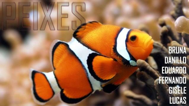 Os peixes representam a maior classe em número de espécies conhecidas entre os vertebrados. Acredita-se que os peixes tenh...