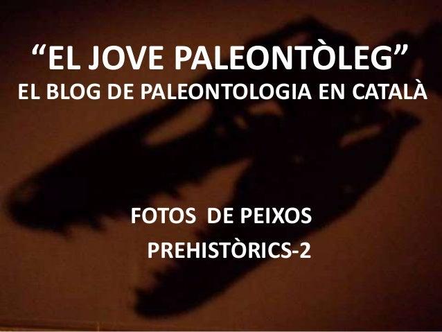 """""""EL JOVE PALEONTÒLEG""""EL BLOG DE PALEONTOLOGIA EN CATALÀFOTOS DE PEIXOSPREHISTÒRICS-2"""