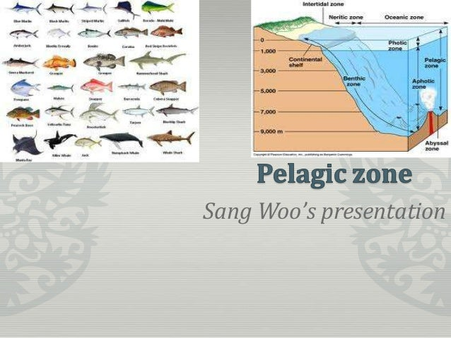 pelagic zone Pelagic Zone Fish