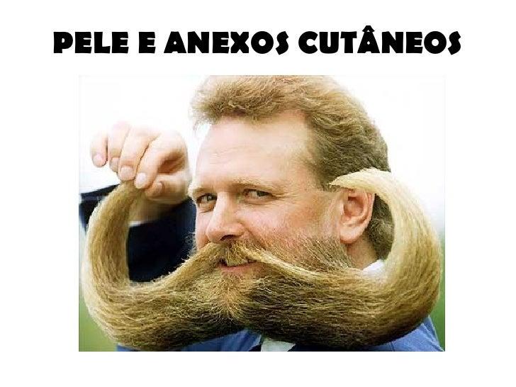 PELE E ANEXOS CUTÂNEOS