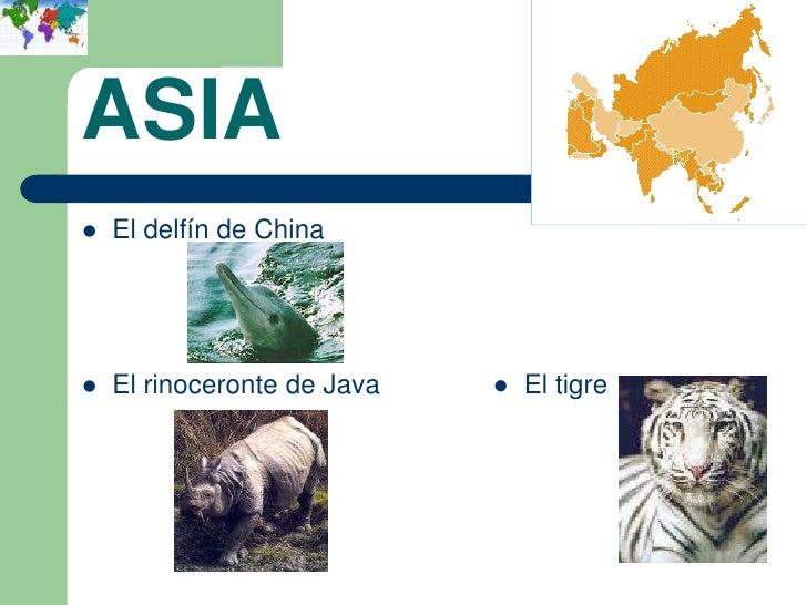 ASIA   El delfín de China   El rinoceronte de Java   ● El tigre