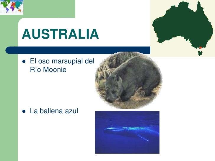 AUSTRALIA   El oso marsupial del    Río Moonie   La ballena azul