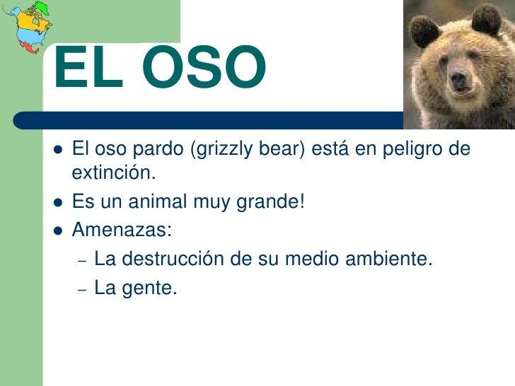 EL OSO   El oso pardo (grizzly bear) está en peligro de    extinción.   Es un animal muy grande!   Amenazas:     – La d...