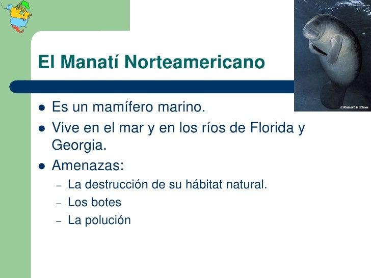 El Manatí Norteamericano   Es un mamífero marino.   Vive en el mar y en los ríos de Florida y    Georgia.   Amenazas:  ...