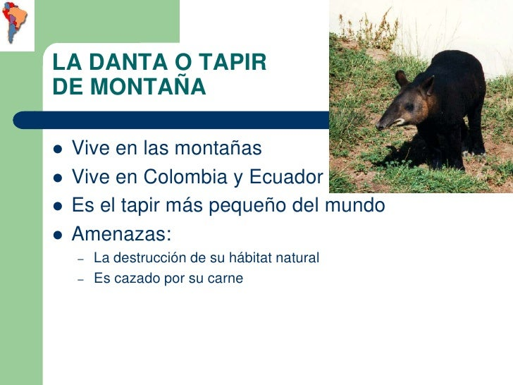 LA DANTA O TAPIRDE MONTAÑA   Vive en las montañas   Vive en Colombia y Ecuador   Es el tapir más pequeño del mundo   A...