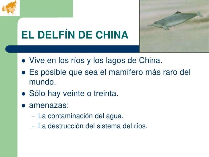 EL DELFÍN DE CHINA   Vive en los ríos y los lagos de China.   Es posible que sea el mamífero más raro del    mundo.   S...