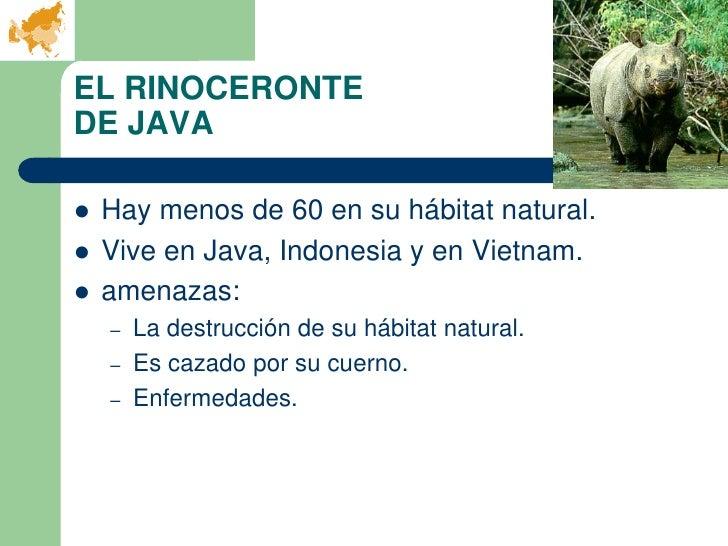 EL RINOCERONTEDE JAVA   Hay menos de 60 en su hábitat natural.   Vive en Java, Indonesia y en Vietnam.   amenazas:    –...
