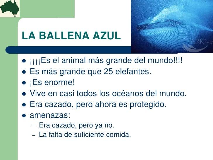 LA BALLENA AZUL   ¡¡¡¡Es el animal más grande del mundo!!!!   Es más grande que 25 elefantes.   ¡Es enorme!   Vive en ...
