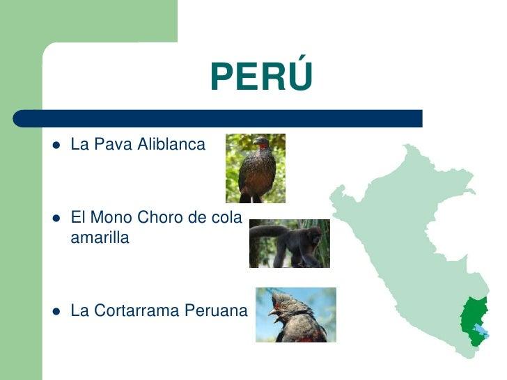 PERÚ   La Pava Aliblanca   El Mono Choro de cola    amarilla   La Cortarrama Peruana