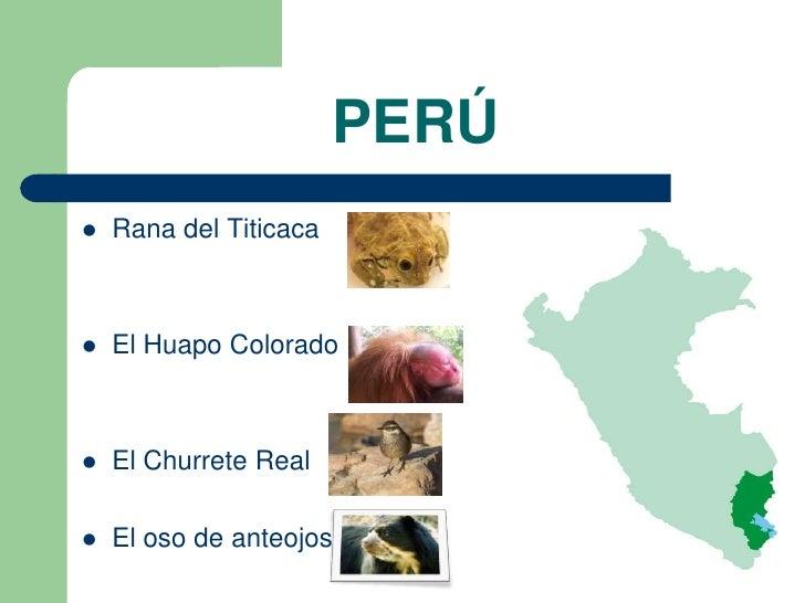 PERÚ   Rana del Titicaca   El Huapo Colorado   El Churrete Real   El oso de anteojos