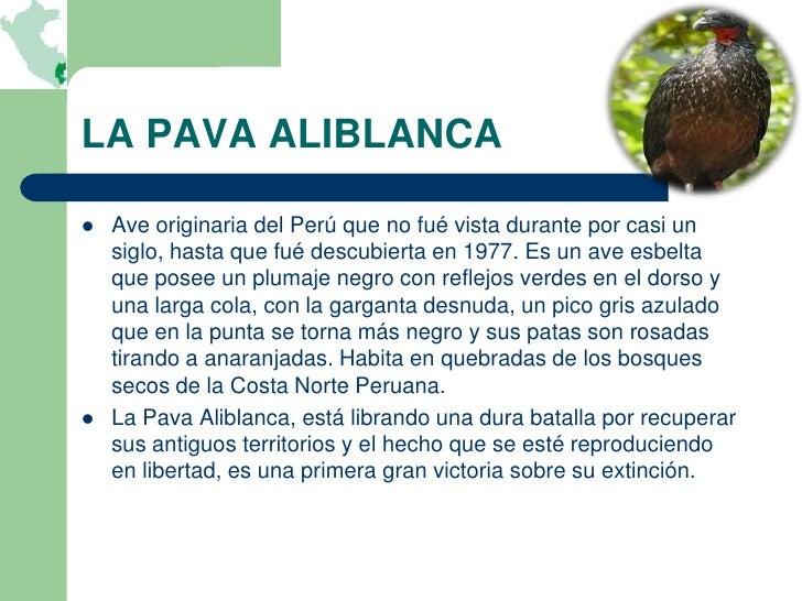 LA PAVA ALIBLANCA   Ave originaria del Perú que no fué vista durante por casi un    siglo, hasta que fué descubierta en 1...
