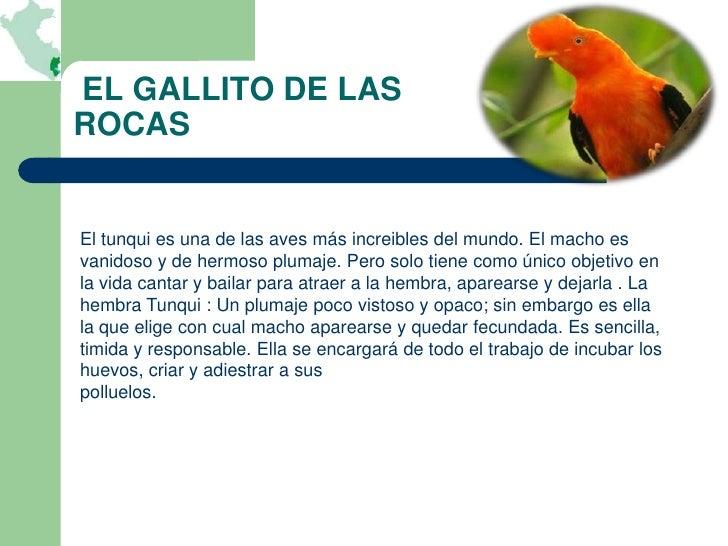 EL GALLITO DE LASROCASEl tunqui es una de las aves más increibles del mundo. El macho esvanidoso y de hermoso plumaje. Per...
