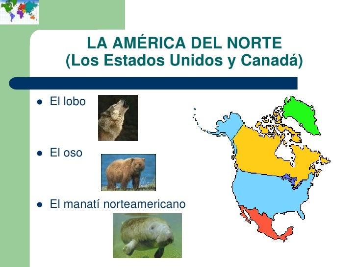LA AMÉRICA DEL NORTE       (Los Estados Unidos y Canadá)   El lobo   El oso   El manatí norteamericano
