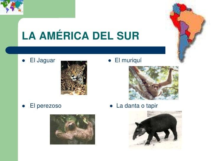 LA AMÉRICA DEL SUR   El Jaguar     ● El muriquí   El perezoso   ● La danta o tapir