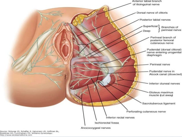 Good Pelvic Floor Innervation ...
