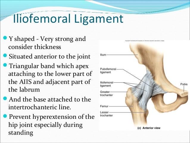 Pelvic girdle, Femur, Sacroiliac joint and Hip Joint
