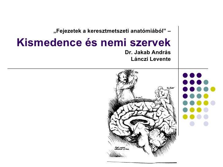 """""""Fejezetek a keresztmetszeti anatómiából"""" –  Kismedence és nemi szervek                                 Dr. Jakab András  ..."""